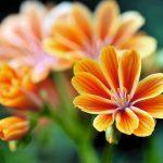 pomaranczowa_lewizja