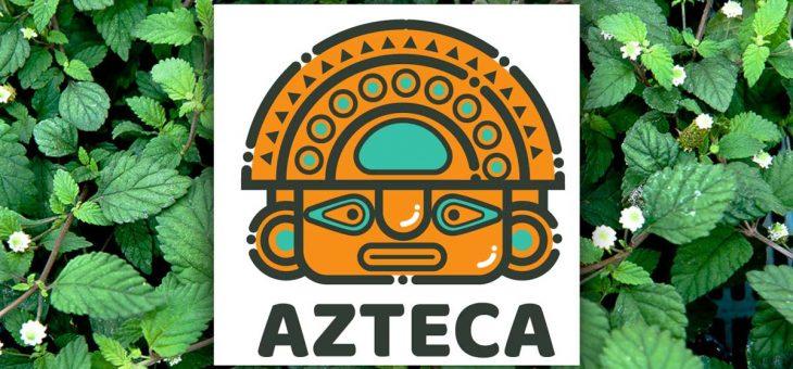 Ziele Azteków  – Lippia dulcis