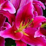 Intestywny kolor i zapach